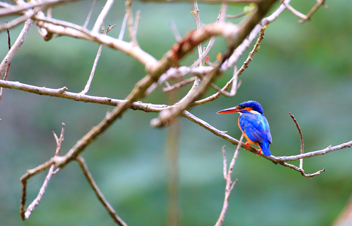 Bird Watching in Sigiriya Sanctuary and Habarana Jungle