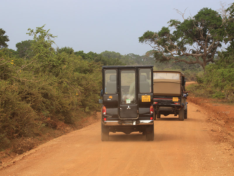 game drive at Yala National Park