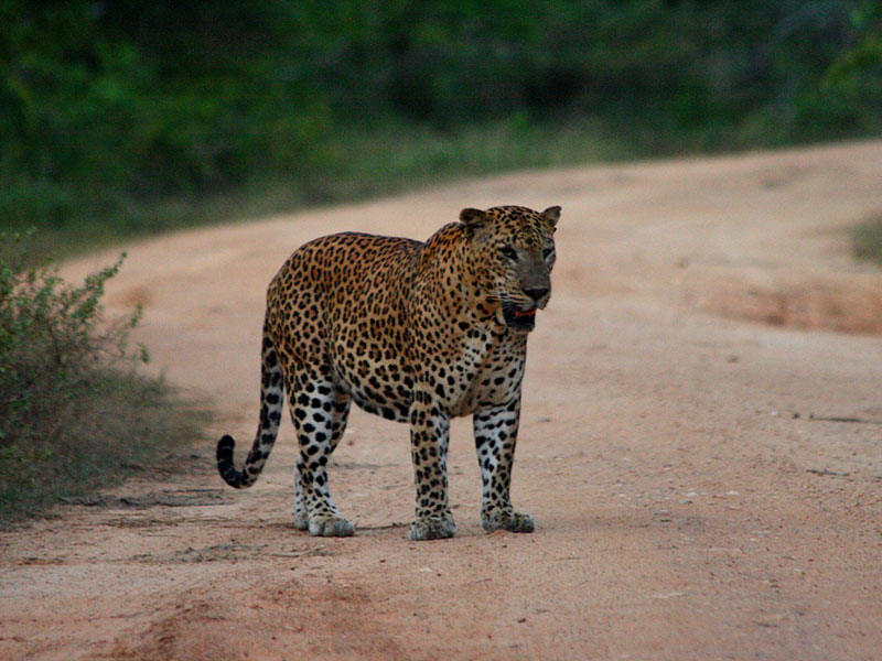 Chandrika hotel with safari tours