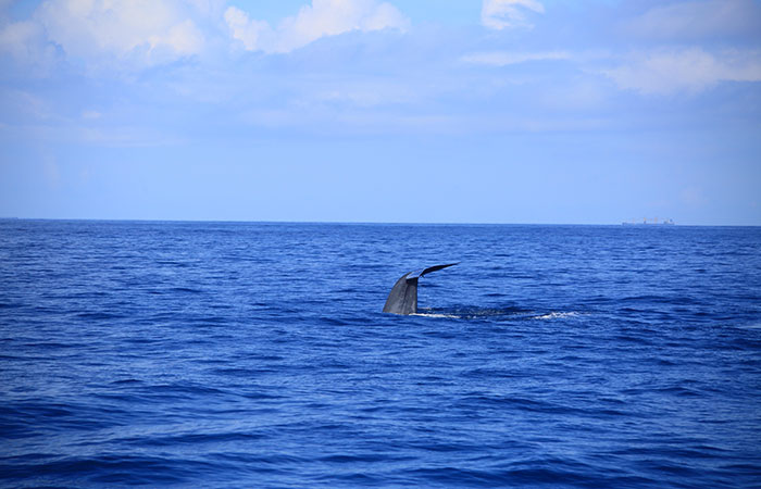 Mirissa Whale Watching Day Tour