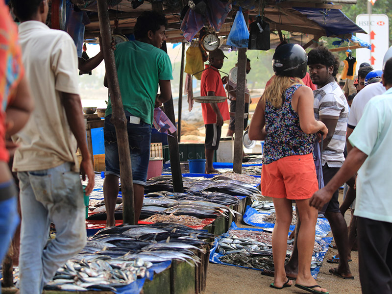 Galle Fort, Madu River, Stilt fishermen and Turtle Hatchery Day Tour to Galle